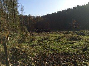 2015-10-31 MTBRB-Ausfahrt (2)